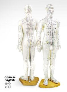 Find More Medical Science Information about FREE SHIPPING English User Manual medical model Male Human Body Acupuncture Points Model 60CM,High Quality model model human hair weave,China model model hp Suppliers, Cheap modeling reel from Ribon Healthcare Online Store on Aliexpress.com