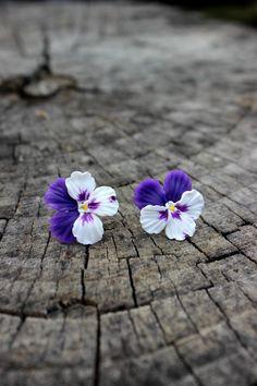 Floral jewelry  Polymer clay earrings  Pansies by Jewelrylimanska
