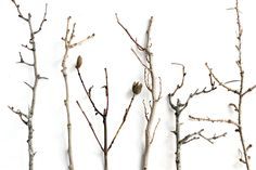 Tallos desnudos o secos de rosal silvestre, olmo, jara, lentisco, majuelo y enebro, Sierra Maqueda y ribera del Fresnedillas. (Ciudad Real)