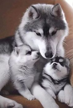 Fantastic pretty dogs detail are readily available on our site. Check it out and you wont be sorry you did. Baby Animals Super Cute, Cute Little Animals, Cute Funny Animals, Funny Dogs, Baby Animals Pictures, Cute Animal Pictures, Funny Animal Photos, Dog Pictures, Cute Dogs And Puppies
