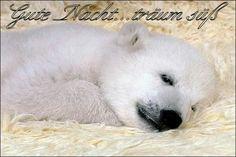Die 778 Besten Bilder Von Eisbär Knut In 2020 Tiere Süße