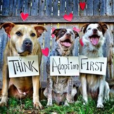 Always look at adoption first. There are always great animals at shelters who are waiting for a second chance!