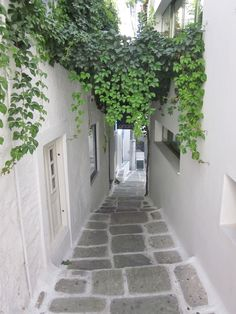 Lush vines & whispering white buildings connected by a path.
