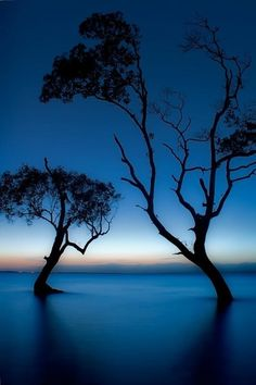 """Dancing Mangrove Trees,"" Dawn at Beachmere, Queensland. Photo: Robert Charity ""Dancing Mangrove Trees,"" Dawn at Beachmere, Queensland. Foto Nature, All Nature, Amazing Nature, Beautiful World, Beautiful Images, Trees Beautiful, Beautiful Moon, Images Cools, Pretty Pictures"