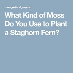 What Kind of Moss Do You Use to Plant a Staghorn Fern?