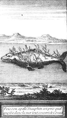 """Dans un ouvrage de 1726 intitulé """"Principales merveilles de la nature..."""" la représentation de ce #dauphin recouvert de coraux est pretexte à décrire les observations de constatées au sujet de ces micros-animaux qui vivent généralement en colonies appelées « polypes » #numelyo #bestiaire #imaginaire"""