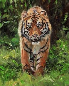 Choose your favorite tiger paintings from millions of available designs. All tiger paintings ship within 48 hours and include a money-back guarantee. Wildlife Paintings, Wildlife Art, Animal Paintings, Tiger Sketch, Tiger Drawing, Tiger Artwork, Tiger Painting, Big Cats Art, Cat Art