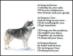 Wonderful All About The Siberian Husky Ideas. Prodigious All About The Siberian Husky Ideas. Alaskan Husky, My Husky, Siberian Husky Puppies, Husky Puppy, Siberian Huskies, Alaskan Malamute, Husky Meme, Mini Huskies, Malamute Husky