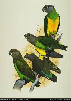 William T. Cooper - Parrots