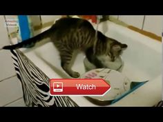 😸 Ultimate Funny Cats Compilation Best Moments 😼 😽 from Pet Lovers 😻