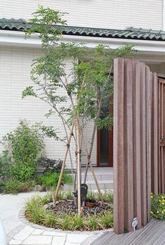 シンボルツリーに常緑樹は最適!人気ランキング上位を特徴別にご紹介 | iemo[イエモ]