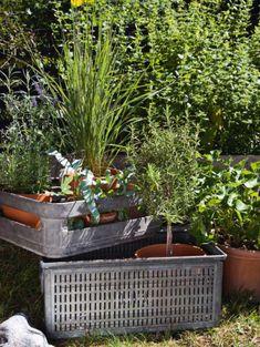 Krukker er ikke bare krukker. Vælg dem med omhu, så de passer i stil og stemning til din terrasse, og fyld dem så med blomster, grønne planter eller krydderurter. Her er 10 gode idéer til en smuk krukkehave.