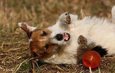 Bilder des Monats - Februar - OUTLAW Terriers