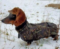 Here Are 12 Awesome Facts About Dachshunds--pretty funny!
