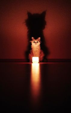 cat, candle, and shadow