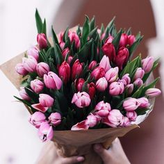Tulip Wedding Bouquet Wedding Bouquet 127 - OOSILETulip Wedding Bouquet Wedding Bouquet 120 - OOSILEClutch bouquet of tulips and gypsophila Tulips In Vase, Pink Tulips, Tulips Flowers, My Flower, Spring Flowers, Planting Flowers, Beautiful Flowers, Decoration Plante, Tulip Bouquet