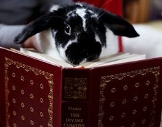 Bunny is quite well read. @Mollie Rae , this looks like a mix between Bo & Rosie!