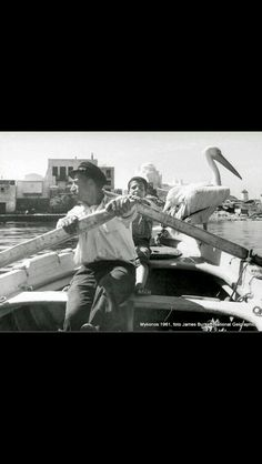 Mykonos and its pelican , 1951 φωτ. Mykonos Island, Mykonos Greece, Athens Greece, Greece Photography, History Of Photography, Vintage Pictures, Old Pictures, Old Time Photos, Greece Pictures