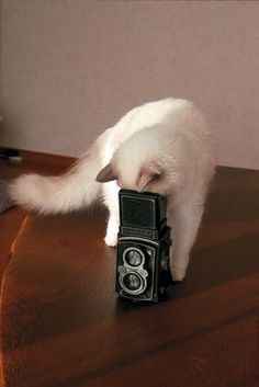 フォトコンテスト:フォトコン写真ギャラリー 2007年入賞作品|写真現像・フォトブック・カメラ販売-キタムラグループ-