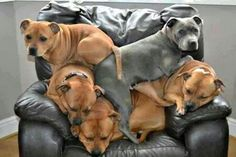 I love this pile -o- pittys!!!! Lol