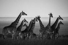 Captivating Wildlife Portraits Celebrate the Soul and Individuality of Africa's Animals - My Modern Met