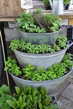 En plante-etagere - Claus Dalby - mit haveliv