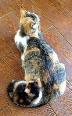 Calico cat with her kitten.