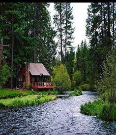 Imagen de forest, nature, and landscape