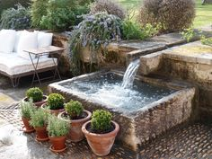 fountain, potted boxwood