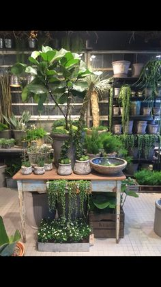 Bang & Thy │ Eksklusiv blomsterkunst i hjetet af Århus ⚶ Garden Cafe, Garden Deco, Garden Shop, House Plants Decor, Plant Decor, Flower Shop Interiors, Garden Center Displays, Flower Shop Design, Deco Champetre