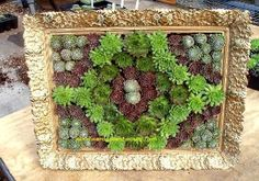 DIY Succulent Frame Box  Turn a vintage decorative frame into  succulent wall art with this DIY project.