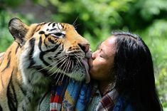 Mulan Jamilah, a 6-year-old Bengal tiger, kisses caretaker Abdullah Sholeh, 33, in the garden beside their home on Jan. 20, in Malang, Indonesia. Robertus Pudyanto / Getty Images