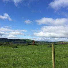 Springfarm Sheep Farm, Wicklow, Ireland  Slightly Brilliant: ::Tweedy's Take the World - Ireland::