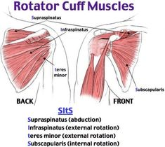 Rotator Cuff Impingement and Tear Supraspinatus (abduction) Infraspinatus (external rotation) Teres minor (external rotation) Subscapularis (internal rotation) Neer and Hawkins Pain with brushing hair or teeth Pain at night when rolling onto shoulder Muscle Anatomy, Body Anatomy, Arm Anatomy, Hand Therapy, Massage Therapy, Rotator Cuff Impingement, Shoulder Exercises Physical Therapy, Upper Limb Anatomy, Shoulder Anatomy