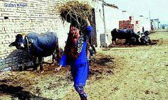 Awesome Sialkot rural areas of Punjab Pakistan