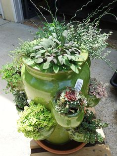 Herbs and succulents growing in lovely green ceramic strawberry pot.