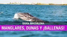 Bahía Magdalena: un paseo entre ballenas y manglares