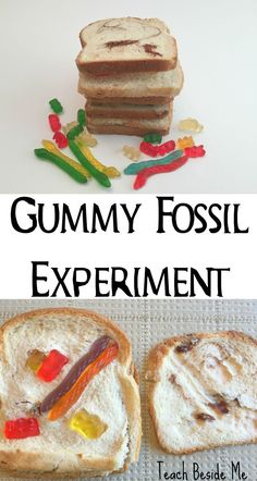 Try this fossil experiment made with bread and gummy worms teaches about sedimentary rocks too Great for geology and dinosaur units via karyntripp Dinosaurs Preschool, Dinosaur Activities, Preschool Science, Elementary Science, Science Classroom, Teaching Science, Science For Kids, Science Ideas, Science Education