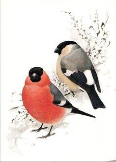 Punatulkku Love Birds, Animals, Image, Flora, Science, Natural, Photos, Animales, Pictures