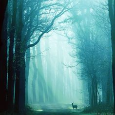 """Always"" by Nelleke Pieters"