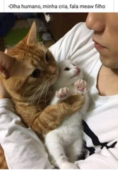 Cute Animal Memes, Cute Funny Animals, Cute Baby Animals, Funny Cute, Funny Dog Images, Funny Animal Pictures, Animal Pics, Hilarious Pictures, Cute Cats And Kittens