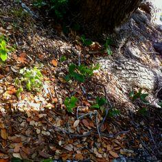 Forest floor (: Forest Floor, Hiking Boots, Flooring, Life, Wood Flooring, Floor