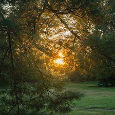 Sunrise in the garden at Stoneleigh. Natural Garden, Autumn, Fall, Acre, Sunrise, Instagram Posts, Plants, Fall Season, Fall Season
