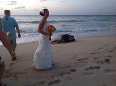 Giant sea turtle photobombs wedding