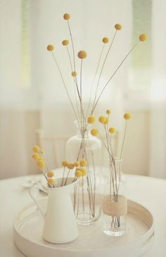 billy buttons with white and glass