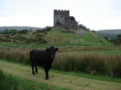 Castle Dolweddyl - Wales