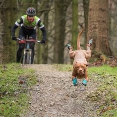 Let's do this! Ruby here seems pretty excited for some mountain biking  @rubythetraildog #backcountrypaws