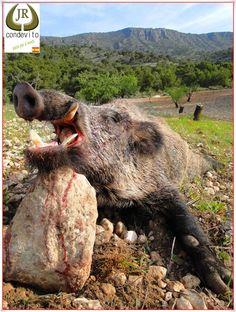 """Great """"macareno"""" hunted in Spain."""