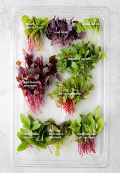 Microgreens Directory | Recipe | Growing productive healthy Microgreens.
