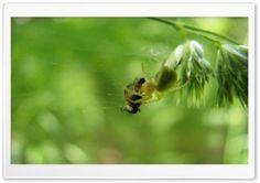 Ankaboot.MR HD Wide Wallpaper for Widescreen